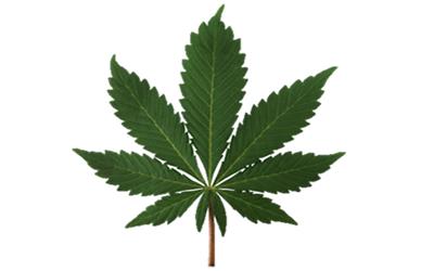 Indica Leaf